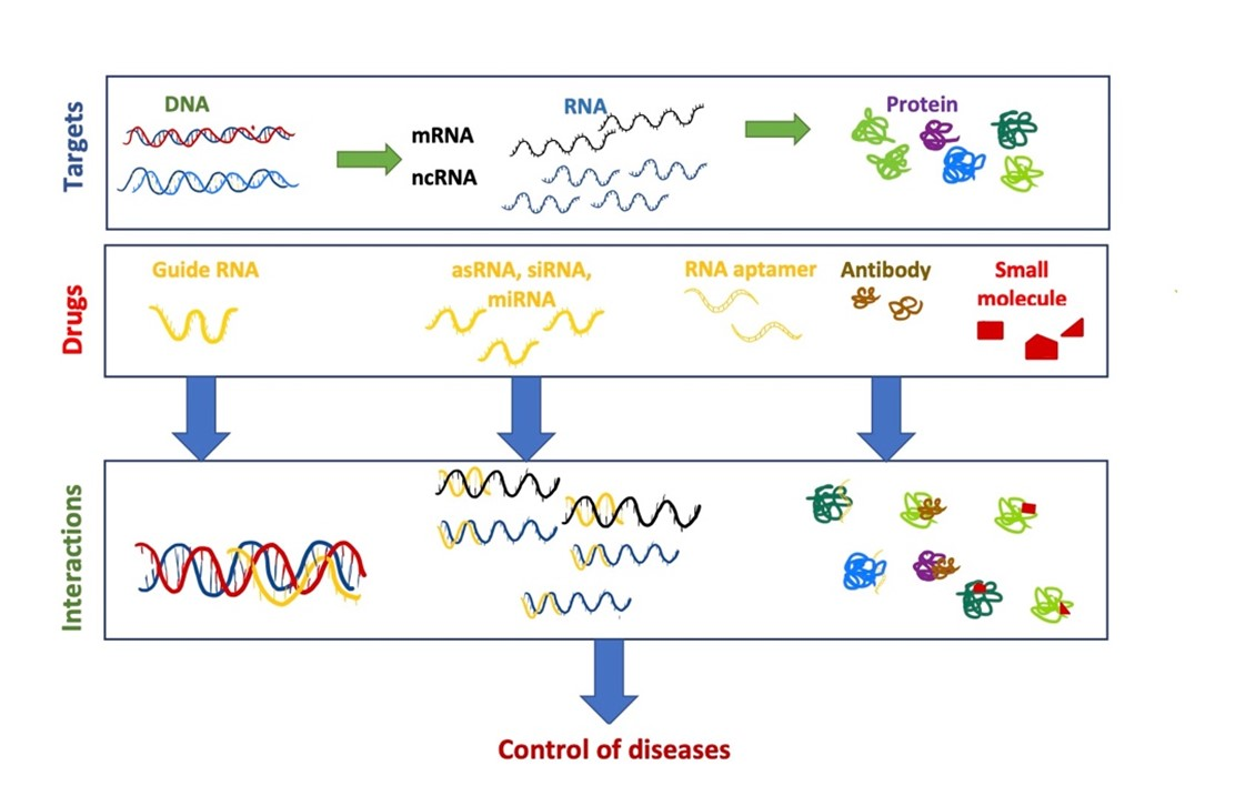 The Adverse Effects of Experimental Messenger RNA (mRNA